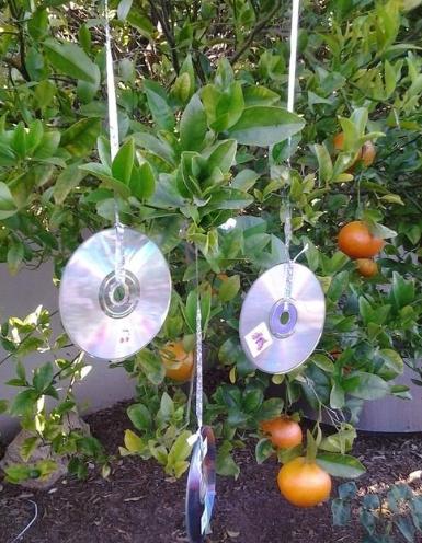 CD in Garden
