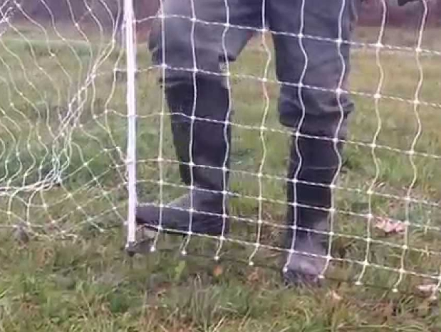 Electric Fences to Protect Chickens