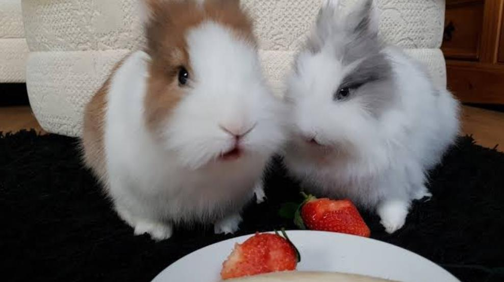 Can Rabbits Eat Strawberries