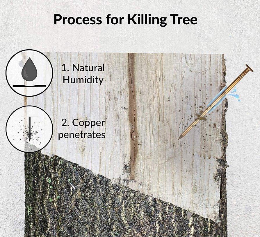 kill tree with copper nails