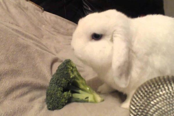 Can Rabbits Eat Broccoli