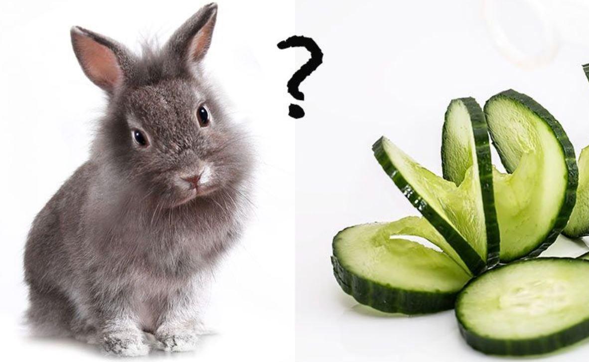 Can Rabbits Eat Cucumber