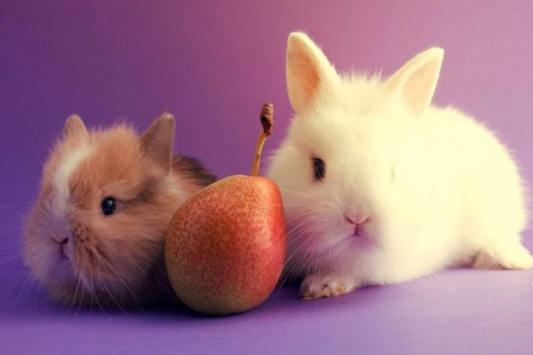 Can Rabbits Eat Pears