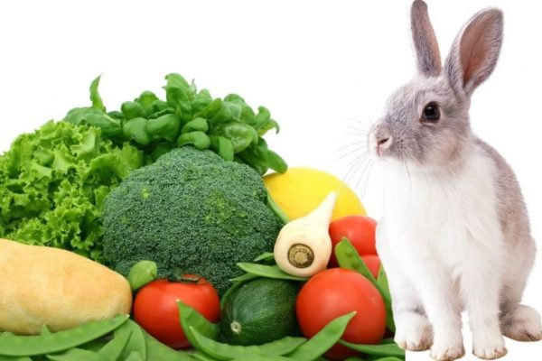 What Vegetables Can Rabbits Eat